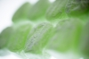 Green Turkish Delight II by Richard Osbourne