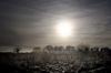 Winter Sun by Richard Osbourne