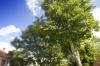 City Trees by Richard Osbourne
