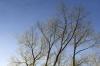 Autumn Trees by Richard Osbourne