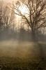 Winter Dawn by Richard Osbourne