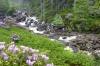 Mountain Stream - Scotland by Richard Osbourne