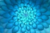 Chrysanthemum by Richard Osbourne