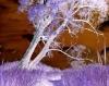 Crack Willow by Richard Osbourne