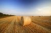 Harvest by Richard Osbourne