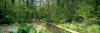 Fairhaven Watergarden, Norfolk by Richard Osbourne