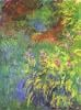Irises, 1914-17 by Claude Monet