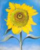 Sunflower, New Mexico, 1935 by Georgia O'Keeffe
