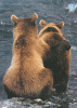 Two Bear Cubs by Art Wolfe