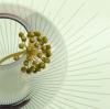 Fatsia japonica by Linda Wood
