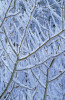 Tree by Michael Peuckert