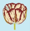 Tulips I - IV, Tulip I by Modern Editions