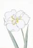 Japanese Irises I - IV, Japanese Iris I by Modern Editions