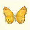Butterfly V by Sophie Golaz