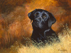Black Labrador by Richard Britton