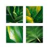 Flora Tropical by Tony Koukos