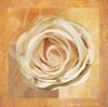 Warm Rose II by Malcolm Sanders