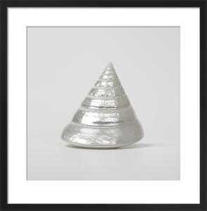 Pearl Sea Shell I by Assaf Frank
