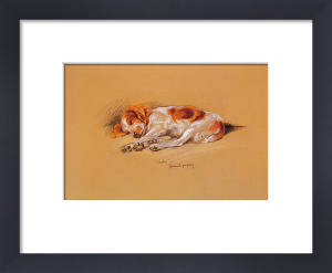 Judy, a Spaniel Puppy by 'Mac' (Lucy Dawson)