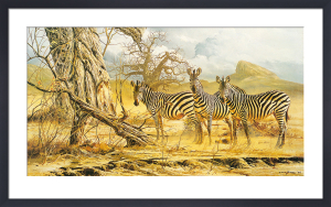 Zebras by Craig Bone