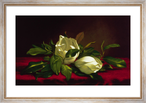 Magnolia Still Life I by Martin Johnson Heade