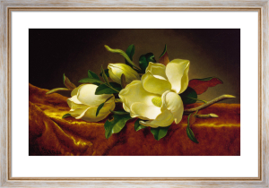 Magnolia on Gold Velvet Cloth by Martin Johnson Heade