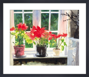 Poinsettias by Richard Akerman
