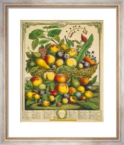 Fruits of the Season - Summer by Robert Furber