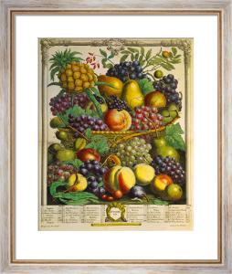 Fruits of the Season - Winter by Robert Furber
