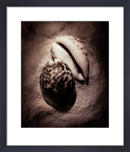 Cowrie by Laurel Wade