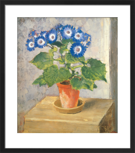 Blue Cineraria by Augustus John