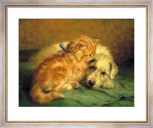 Kitten by John Fitz Marshall