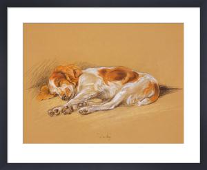 Judy, a Spaniel Puppy by Mac