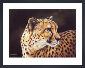 Leopard by Kim Thompson
