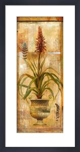 Rojo Botanical II by John Douglas