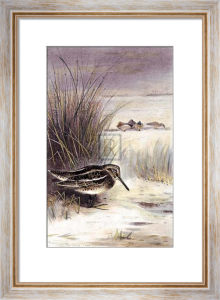 Jack Snipe by Archibald Thorburn