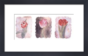 Tulips by Matyia Ross
