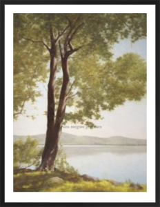 Sunlit Trees I by John Folchi
