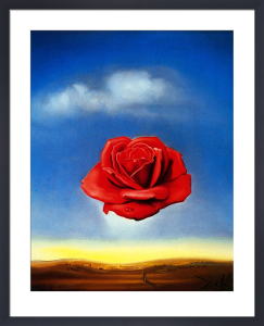 The Meditative Rose by Salvador Dali