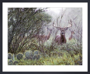 Lone Star Whitetail by John Banovich