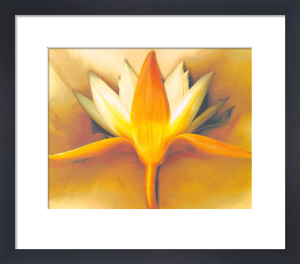 Orange Lotus by Betsy Cameron