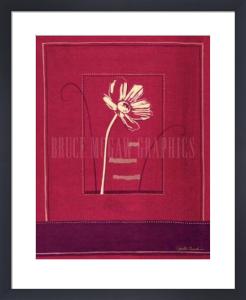 Punjab Poppy by Gaelle Cicarda