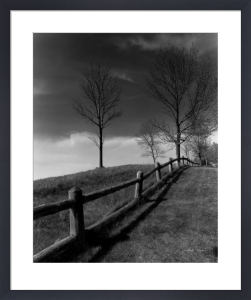 Fences and Trees, Empire, MI by Monte Nagler
