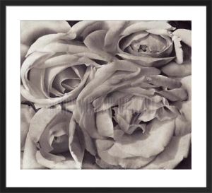 Roses, Mexico by Tina Modotti