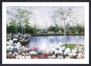 White Birches by Diane Romanello