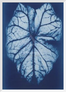 Leaf Study #1, 2002 by Hager