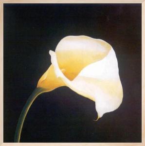 Calla Lily by Hampton Hall