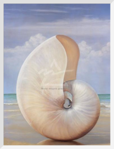 Pearled Nautilus by David Hwang