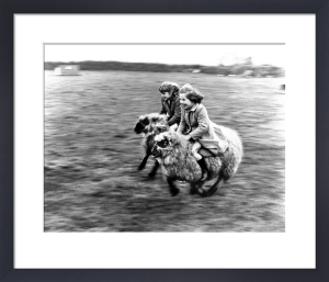 Girls riding on sheep by John Drysdale