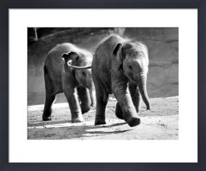 Two elephants by Walter Sittig